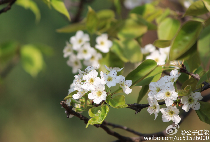 情如花,最美的绽放往往只是刹那芳华