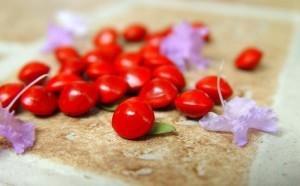红豆生南国